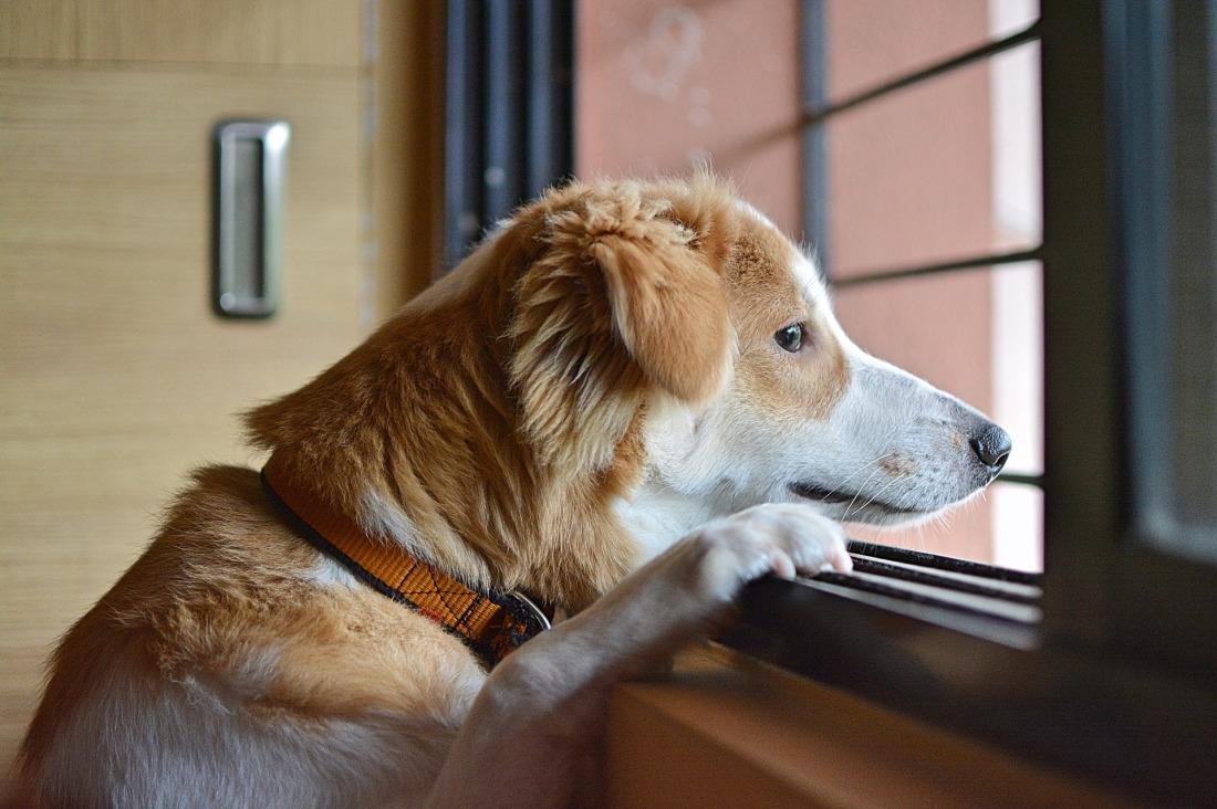 warten_hund-traurig